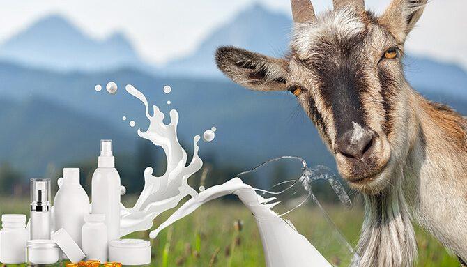 Výnimočnosť kozieho mlieka v kozmetike